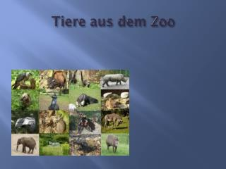 Tiere aus dem Zoo