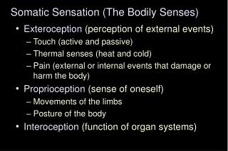 Somatic Sensation (The Bodily Senses)