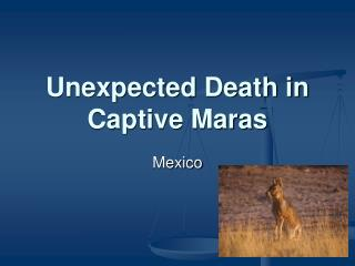 Unexpected Death in Captive Maras