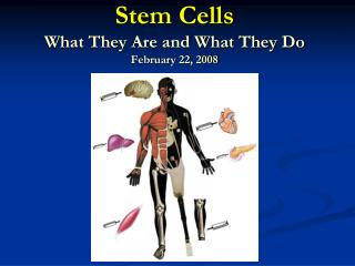 Stem Cells What They Are and What They Do February 22, 2008