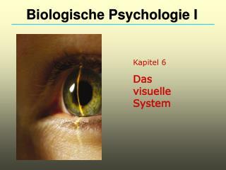 Kapitel 6 Das visuelle System