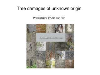 Tree damages of unknown origin Photography by Jan van Rijn