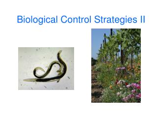 Biological Control Strategies II