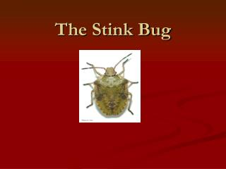 The Stink Bug