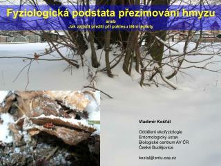 Fyziologická podstata přezimování hmyzu aneb Jak zajistit přežití při poklesu tělní teploty