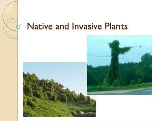 Native and Invasive Plants