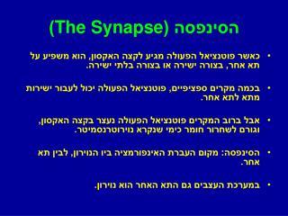 הסינפסה ( The Synapse )