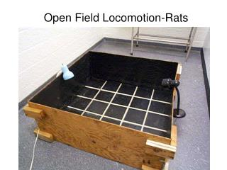 Open Field Locomotion-Rats