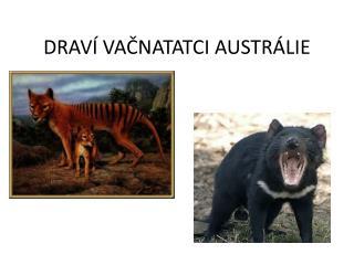 DRAVÍ VAČNATATCI AUSTRÁLIE