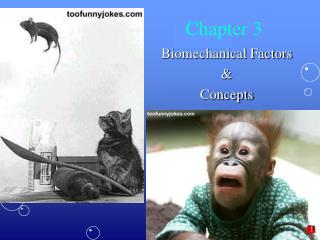 Biomechanical Factors    Concepts