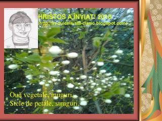 Ouă vegetale, muguri, Stele de petale, struguri,