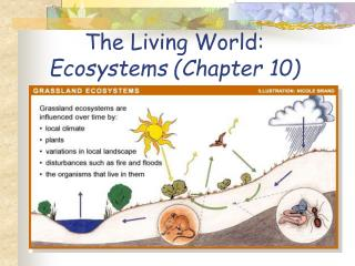 The Living World: Ecosystems (Chapter 10)