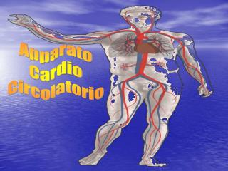 Apparato Cardio Circolatorio