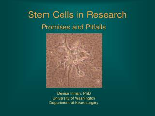 Stem Cells in Research