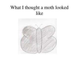 What I thought a moth looked like