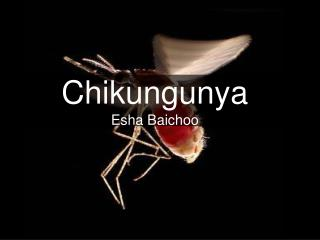 Chikungunya Esha Baichoo