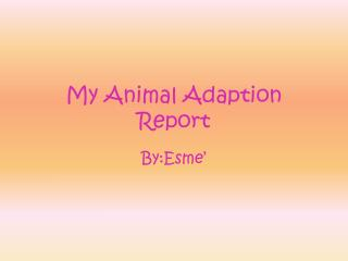 My Animal Adaption Report