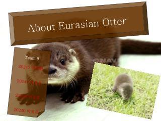 About Eurasian Otter