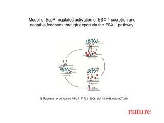 S Raghavan  et al. Nature 454 , 717-721 (2008) doi:10.1038/nature07219