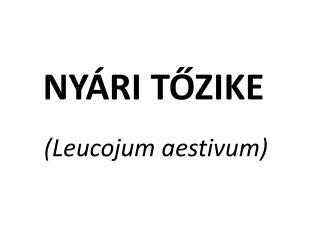 NYÁRI TŐZIKE ( Leucojum aestivum )