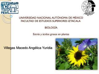 Villegas Macedo Angélica  Yuridia