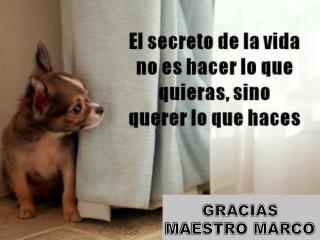 GRACIAS MAESTRO MARCO
