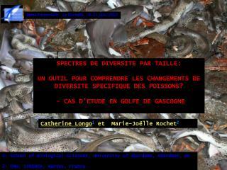 SPECTRES DE DIVERSITE PAR TAILLE: