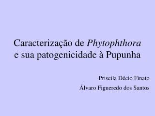Caracterização de  Phytophthora  e sua patogenicidade à Pupunha