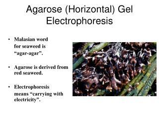 Agarose (Horizontal) Gel Electrophoresis