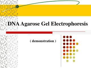 DNA Agarose Gel Electrophoresis