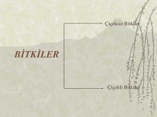 BİTKİLER