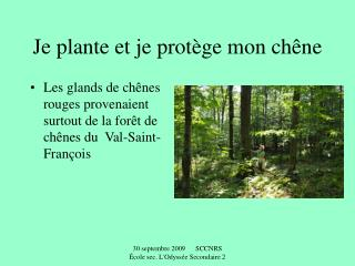 Je plante et je protège mon chêne