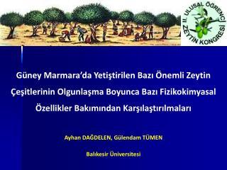 Güney Marmara'da Yetiştirilen Bazı Önemli Zeytin