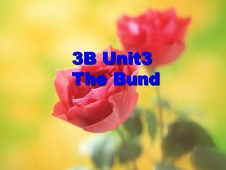 3B Unit3         The Bund