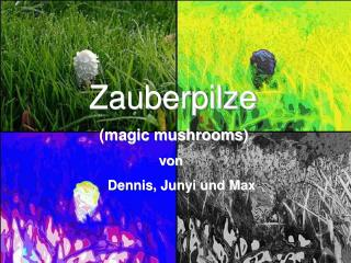 Zauberpilze (magic mushrooms) von Dennis, Junyi und Max