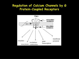 Regulation of Calcium Channels by G Protein-Coupled Receptors