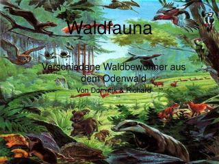 Waldfauna