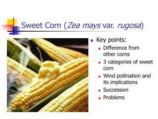 Sweet Corn Zea mays var. rugosa