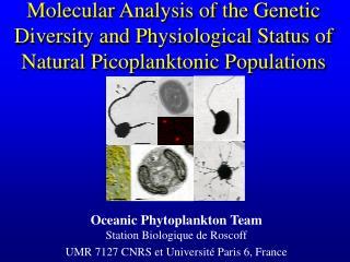 Oceanic Phytoplankton Team Station Biologique de Roscoff