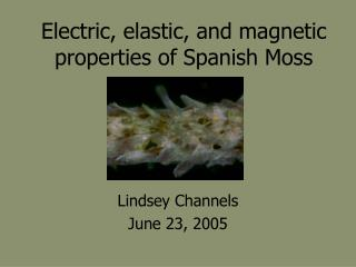 Electric, elastic, and magnetic properties of Spanish Moss