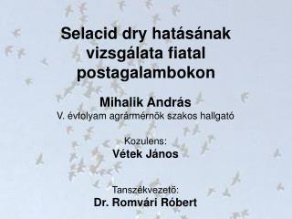 Selacid dry hatásának vizsgálata fiatal postagalambokon