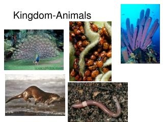 Kingdom-Animals