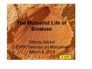 The Mutualist Life of  Bivalves