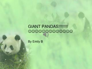 GIANT PANDAS!!!!!!!!  