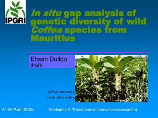 In situ  gap analysis of genetic diversity of wild  Coffea  species from Mauritius