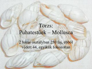 Törzs: Puhatestűek – Mollusca