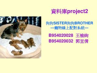 資料庫 project2 狗狗 SISTER 狗狗 BROTHER --- 寵物線上配對系統 ---