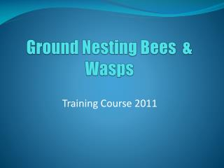 Ground Nesting Bees  & Wasps