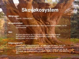 Skovøkosystem