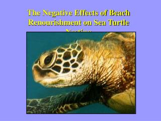 The Negative Effects of Beach Renourishment on Sea Turtle Nesting
